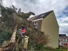 Twee daken beschadigd nadat rukwind boom velt