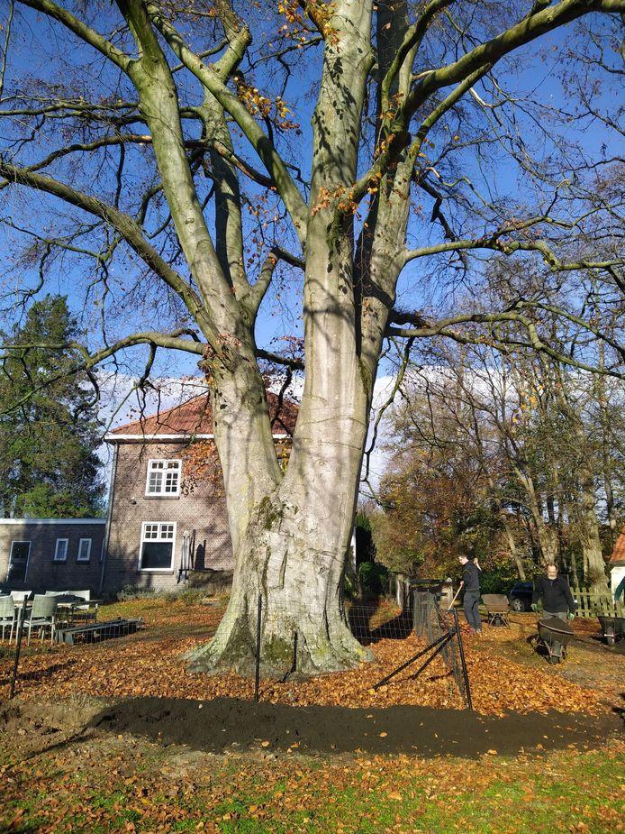 Betrokken inwoners proberen de boom in de pastorietuin te redden.