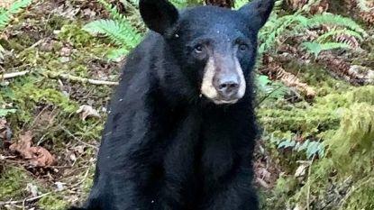 Zwarte beer moet sterven omdat voorbijgangers hem eten gaven en selfies namen