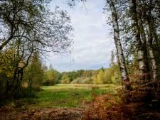 Landschap Overijssel pakt uitdrogen Aamsveen aan 'Bloemrijke hooilanden veranderen in eentonige graslanden en berkenbossen'