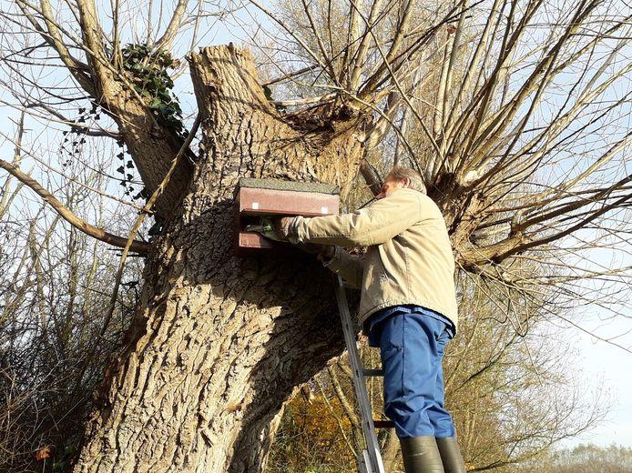 Een vrijwilliger van Natuurpunt Rupelstreek hangt een nestkastje voor een steenuil.