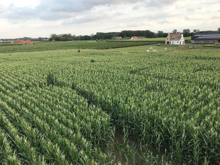 Voor het tweede opeenvolgende jaar pakt zorgboerderij Tallaart uit met een maïsdoolhof.