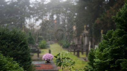 Natuurpunt gidst op kerkhof Wetteren
