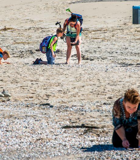 Op zoek naar prehistorie op het nieuwste stukje van Nederland: 'Dit is een walhalla voor fossielenzoekers'