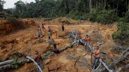 WWF opent noodfonds voor Amazonewoud