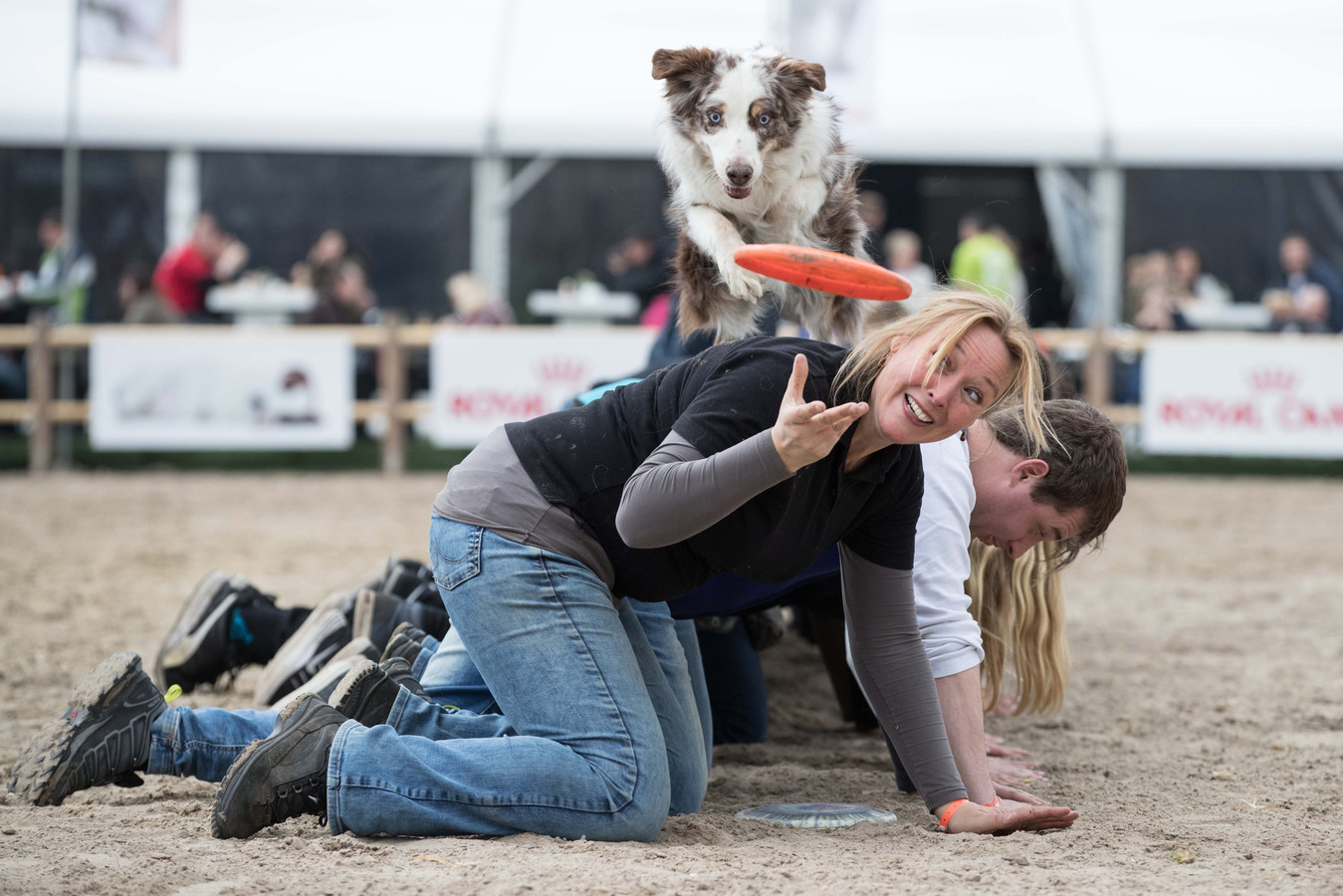 Op 4, 5, en 6 mei vindt Animal Event plaats in de Beekse Bergen.