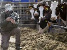 Bejagen bruine rat bij Betuwse boerenbedrijven blijft keiharde noodzaak