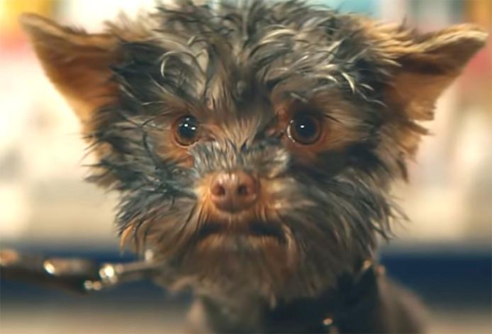 Het hondje Frekkel (in het echt heet-ie Pistacio) was de blikvanger van de oudejaarsreclame van de Staatsloterij.
