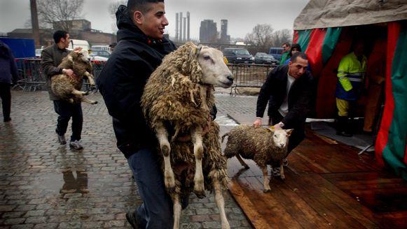 Archiefbeeld: elk jaar worden er verschillende schapen ritueel geslacht ter ere van het offerfeest.