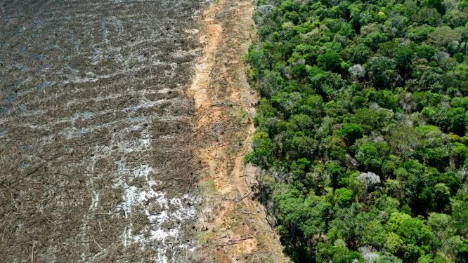 Ontbossing Braziliaans Amazonegebied op hoogste niveau sinds 2008: drie voetbalvelden per minuut gekapt