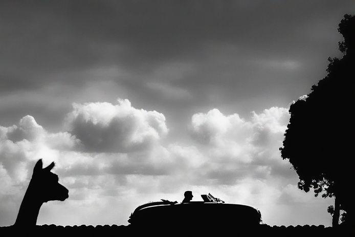 De genomineerde foto: 'Alpaca met bruidegom'