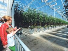 Een miljoen euro boete geëist in zaak tegen tomatenkweker en kassenbouwer