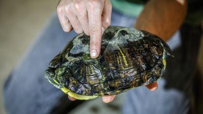 'Verboden' schildpad opgevist uit filter van waterzuiveringsstation