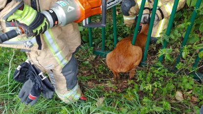 Brandweer redt ree uit hachelijke situatie