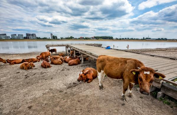 Het is droog en het blijft droog, maar ondanks 'code geel' is er **nog water zat** in Nederland