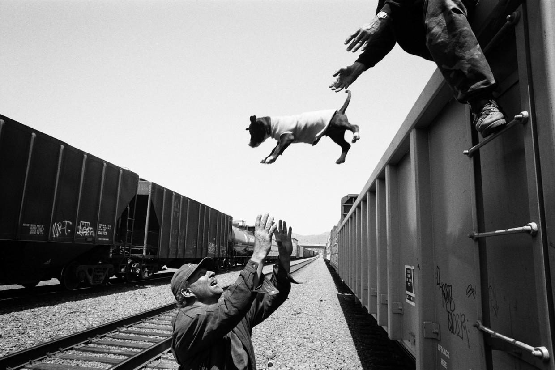 Hoe hobo-honden uitstappen