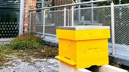 In Freinetschool De Zevensprong is een nieuw bijenvolk neergestreken