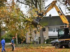 Treurnis over geen controle Hof van Twente op bomenkap en herplant