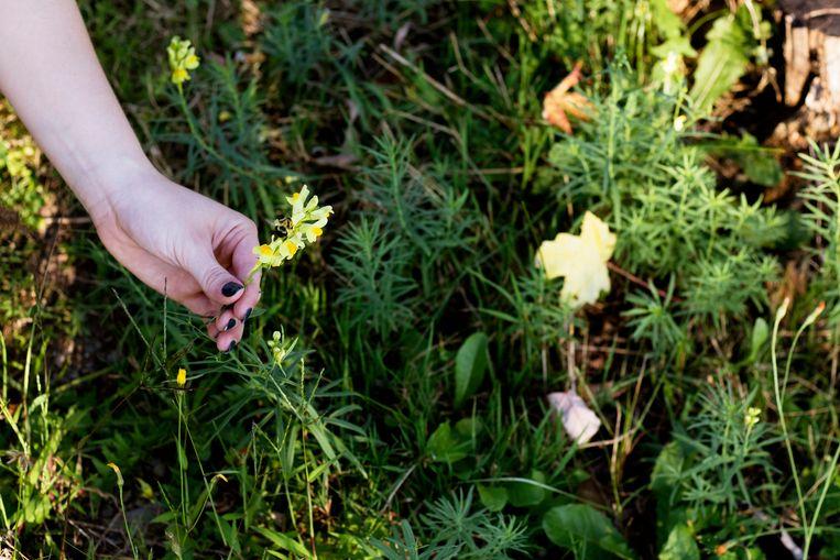 Maai je gazon minder, zaai wat kruiden en laat je moestuin zijn gang gaan: een bijvriendelijke tuin creëren is een makkie. Beeld Getty Images/iStockphoto