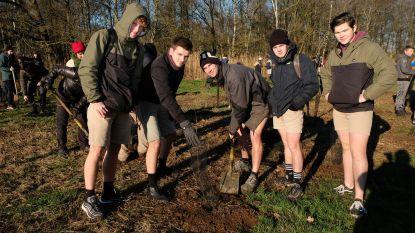 Zaterdag nog een koeienweide, nu een klimaatbos: 250 vrijwilligers planten 3.000 bomen in Heindonk