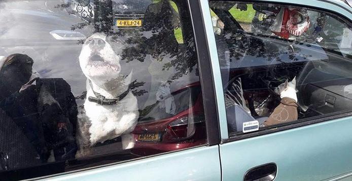 Twee honden zitten vast in een auto op de parkeerplaats van de Efteling.