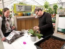Orchideeëndokter in Beek en Donk: 'Het is meestal onwetendheid'