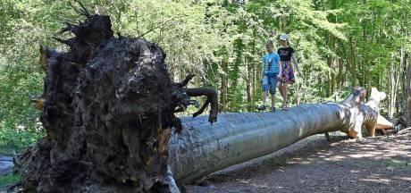 Druk bezocht bos krijgt een oppepper: 'Welkom in de Waterwinbossen'