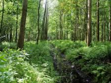 Wandelen door natuur bij Dierdonk Helmond