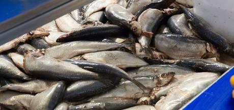 Vlaardingse vis- en haringhandel na tien generaties verkocht