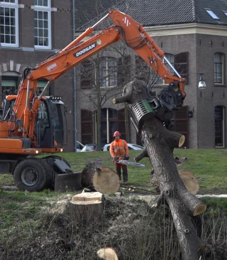 Let je niet op, ligt er een boom in de Zwolse gracht