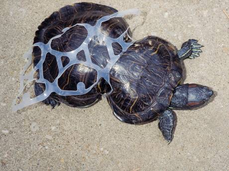 Verbod steeds dichterbij: 'Straks meer plastic dan vissen in de zee'