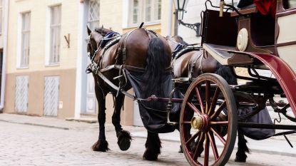 Koetsier in zorgwekkende toestand afgevoerd nadat hij met paard in berm belandt