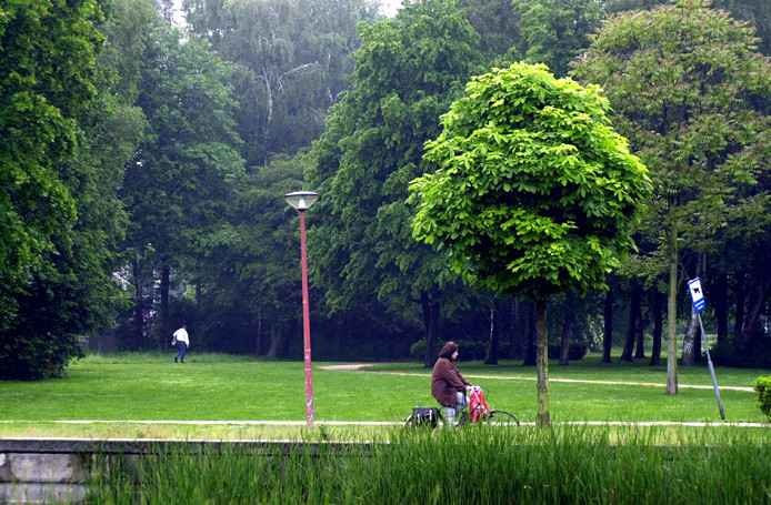 Zestien bomen uit Park 't Loo in Voorburg hebben via de 'bomenmarktplaats' een nieuwe standplaats gevonden. archieffoto