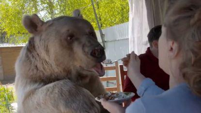 Een bruine beer aan tafel of een krokodil in de living? In 'Telefacts Zomer' kan het allemaal