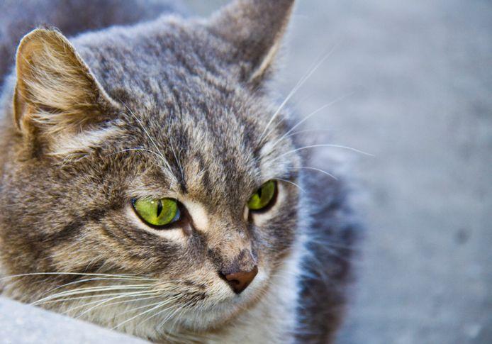 Een kat. Beeld ter illustratie.