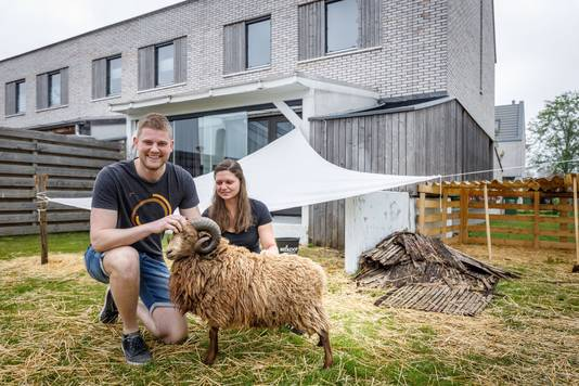Peter en Astrid zijn vrijdag getrouwd en hebben van hun vrienden een ram kado gekregen. Ze wonen echter in een rijtjeshuis n Hoogeveen.