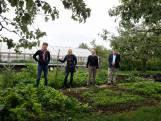 Als ze in Nijmegen een herenboerderij beginnen, waarom dan niet in Sint Anthonis?
