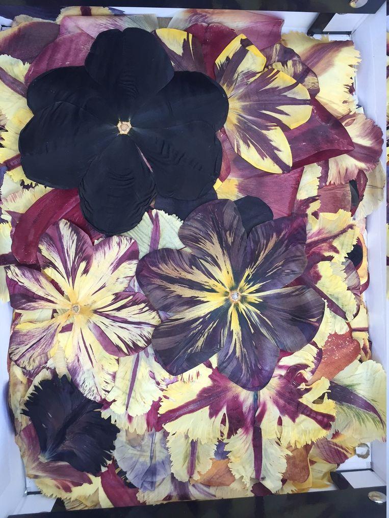 Meer dan 100.000 gedroogde tulpenblaadjes verwerkte Tee in haar kunstwerk Beeld Jan Pieter Ekker