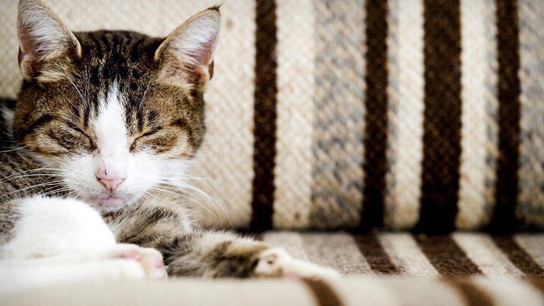 Huisdieren kunnen goed onbewuste signalen van baasjes oppikken Beeld ANP