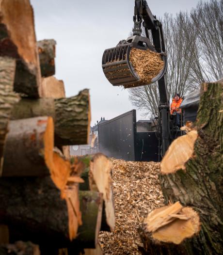 Nieuwe kapronde in Oisterwijk: eik, els, beuk, berk, linde, hazelaar, haagbeuk, hemelboom