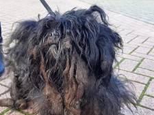 Arm beestje! Zwaar verwaarloosd hondje gevonden in Beatrixpark