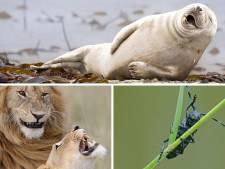 Quelle sera la photo animalière la plus drôle de l'année?
