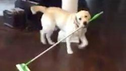 VIRAL3: Propere hond dweilt vloer