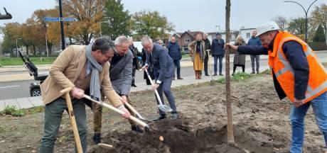 Burgemeester plant eerste van 125 jubileumbomen van Witzand