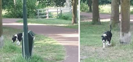 Gemertse buurt vreest bijtgrage hond