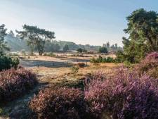 Keverplaag teistert landgoed Den Treek-Henschoten