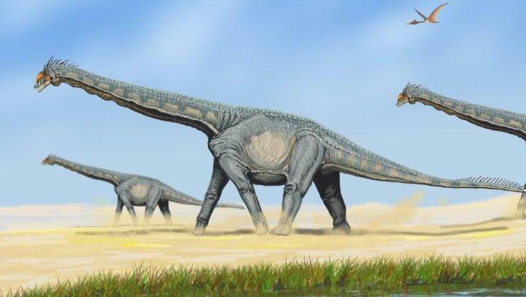 Impressie van een Alamosaurus, ook behorend tot de Titanosauria. Beeld Wikipedia