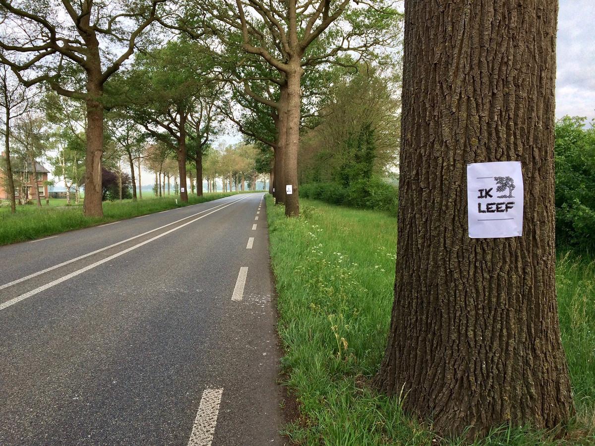 Eerder dit jaar waren er affiches opgehangen als protestactie tegen bomenkap langs de N319 tussen Ruurlo en Groenlo. Een voorstel uit het burgerinitiatief naar aanleiding van deze bomenkap is in Provinciale Staten unaniem aangenomen. Behoud van gezonde bomen wordt uitgangspunt in Gelderland.
