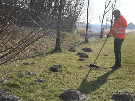 Molshopen schieten als paddenstoelen uit de grond