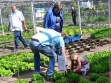 'Zelfvarende boten zijn oplossing voor vervoeren boxen met Westlandse groenten en fruit naar Delft'